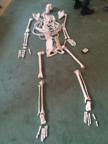 Richard'sSkeleton